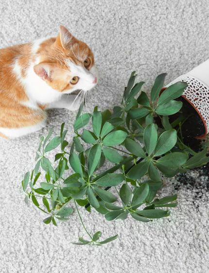 Cat spill on carpet | Markville Carpet & Flooring